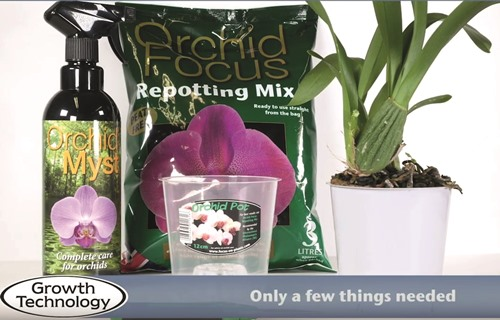 Repotting a Cambria Orchid
