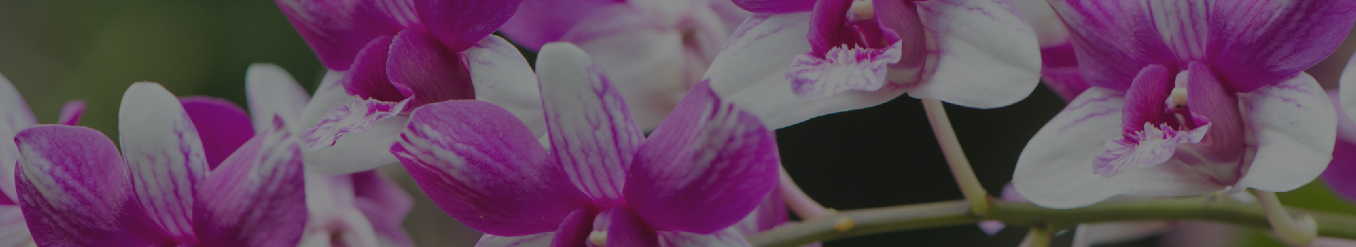 orchids banner